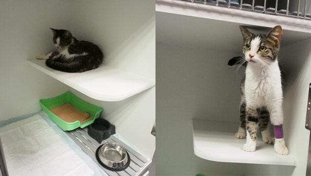 Deux chat à la chatterie
