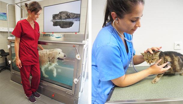 Hydrotherapie chien, puis chat en consultation