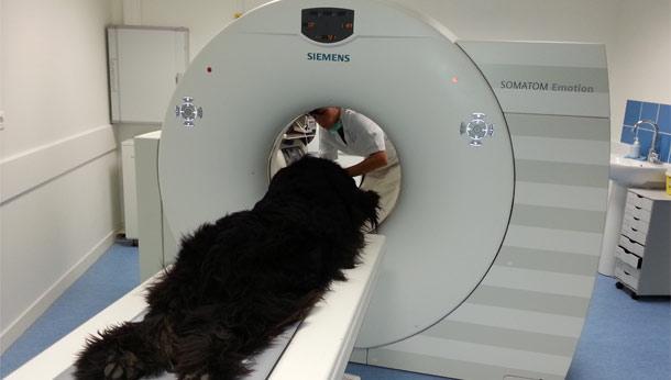 Scanner d'un gros chien